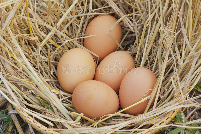 Horizontal photo of several hen eggs which are placed on nice haystack from dried straws and inside wicker basket. Light wooden wall is in background royalty free stock photos