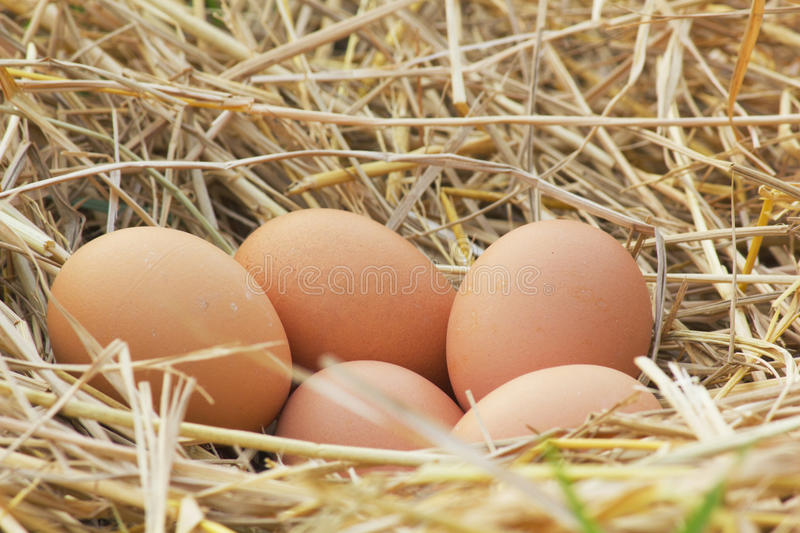 Horizontal photo of several hen eggs which are placed on nice haystack from dried straws and inside wicker basket. Light wooden wa. Ll is in background stock image