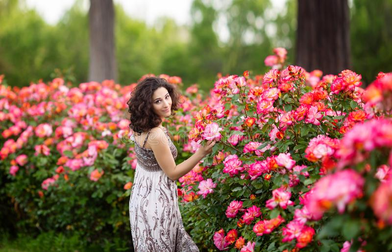 Horizontal portrait of young attractive brunette caucasian woman near huge pink rose bush in a garden. Smiling, looking to the cam. Era over her shoulder royalty free stock photos