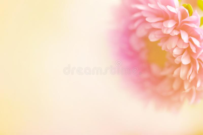 A beautiful soft flower with text area. royalty free stock image