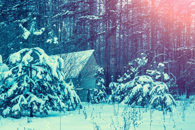 Horizontal rural Forêt de pin couverte de neige photographie stock libre de droits