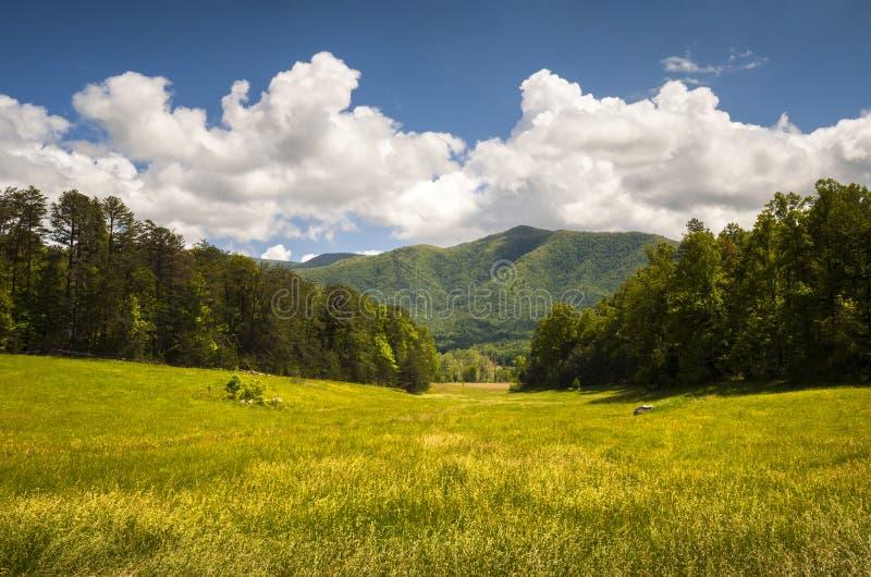 Horizontal scénique de source de stationnement national de Great Smoky Mountains de crique de Cades photos libres de droits