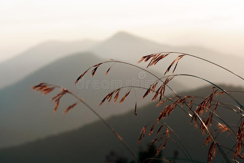 Horizontal sc?nique de montagne Montagnes de Caucase au coucher du soleil Tiges de Graass sur le fond flou de montagnes photo libre de droits