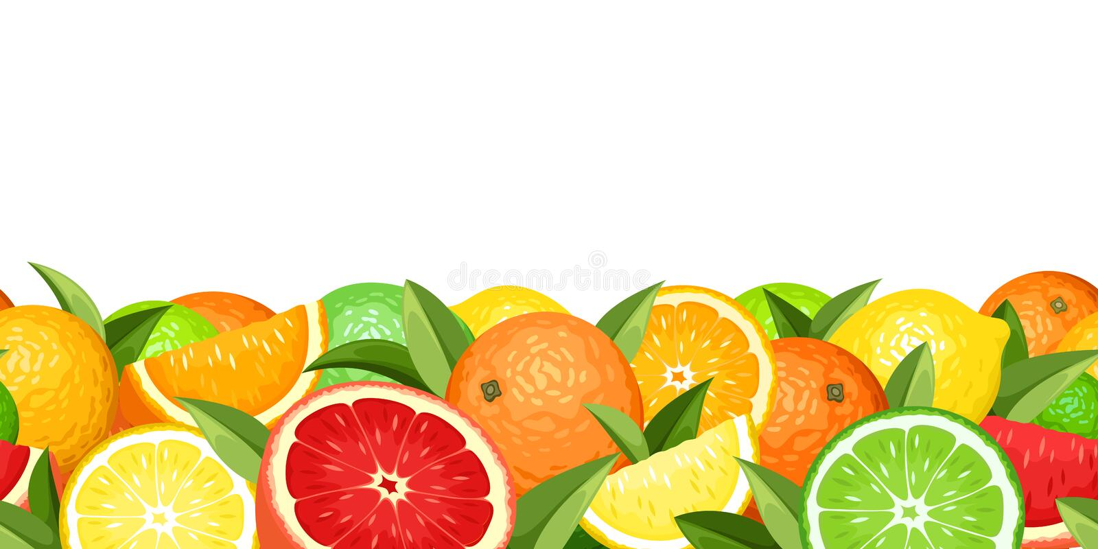 Horizontal seamless background with citrus fruits. Vector illustration. Vector horizontal seamless background with various citrus fruits and green leaves vector illustration