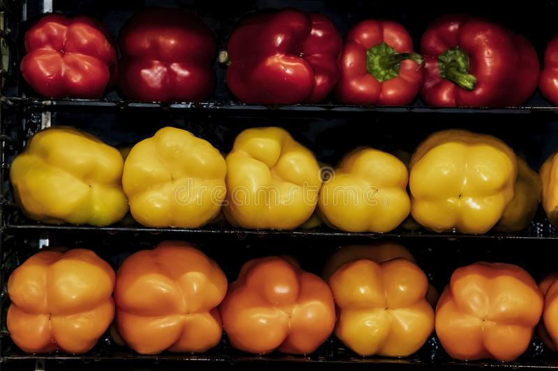 Horizontal shelves holding red yellow and orange sweet peppers against a black background stock image