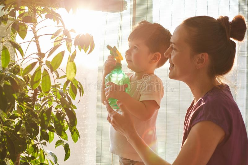 Horizontal shot of handsome small make kid holds pulverizer, helps mother to spray and water domestic flowers, stand together agai stock image
