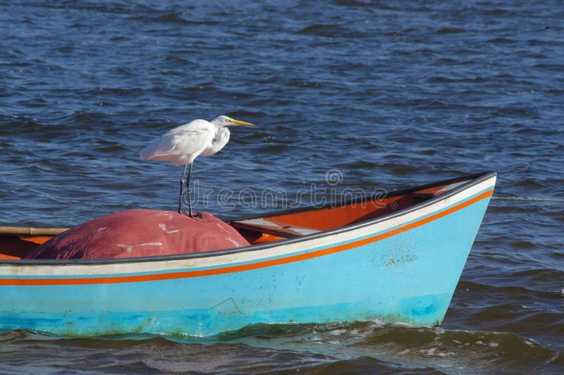 Horizontal shot of a white heron standing on a red plastic tarp on a blue boat in a body of water stock photography