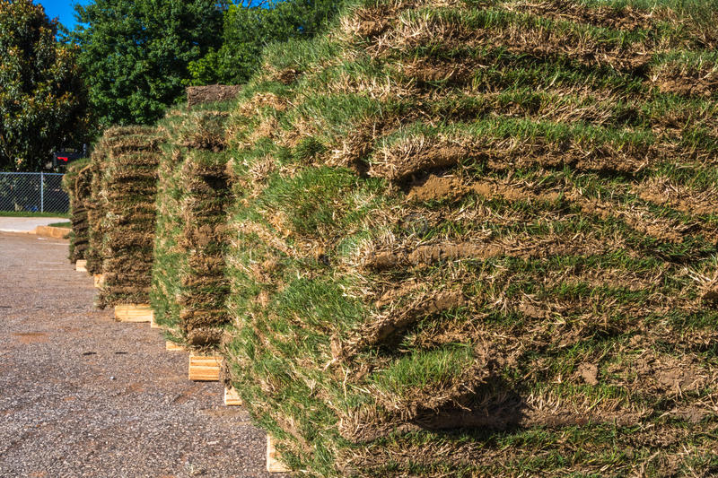 Horizontal Sod Closeup royalty free stock image