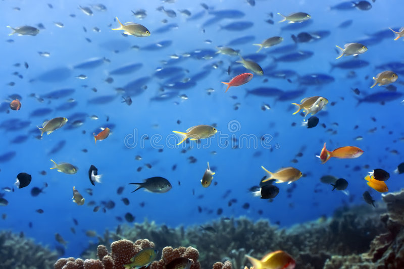 Horizontal sous-marin image libre de droits