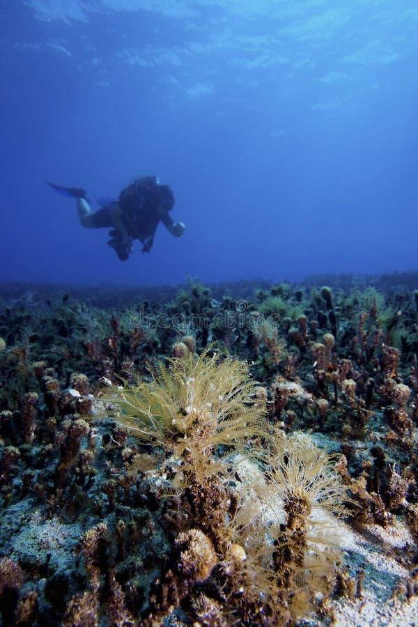 Horizontal sous-marin avec le plongeur photographie stock libre de droits