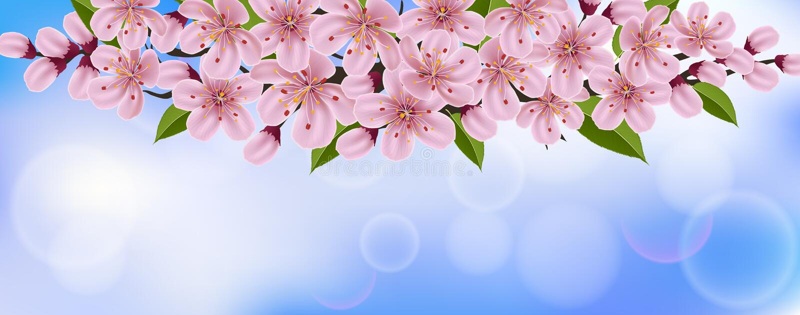 Horizontal spring background with pink cherry flowers and branch stock illustration