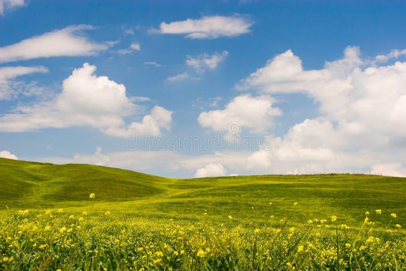 Horizontal toscan fleuri photographie stock
