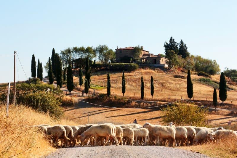 Horizontal, Toscane Val d'Orcia image libre de droits