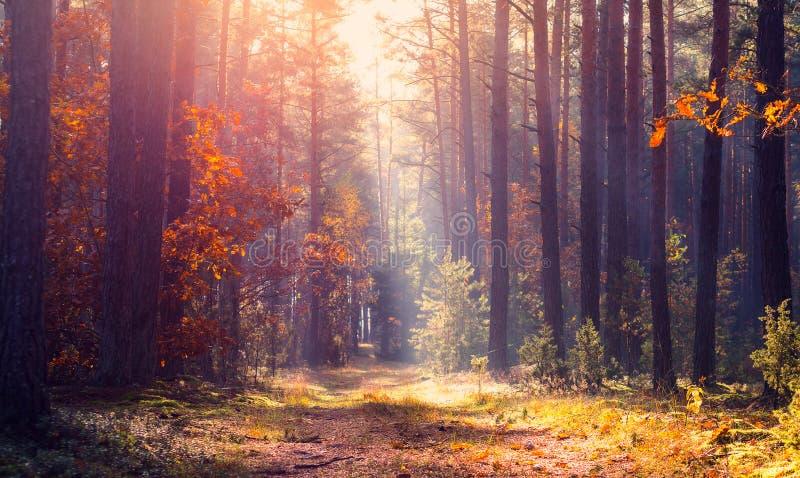 Horizontal tranquille d'automne photographie stock