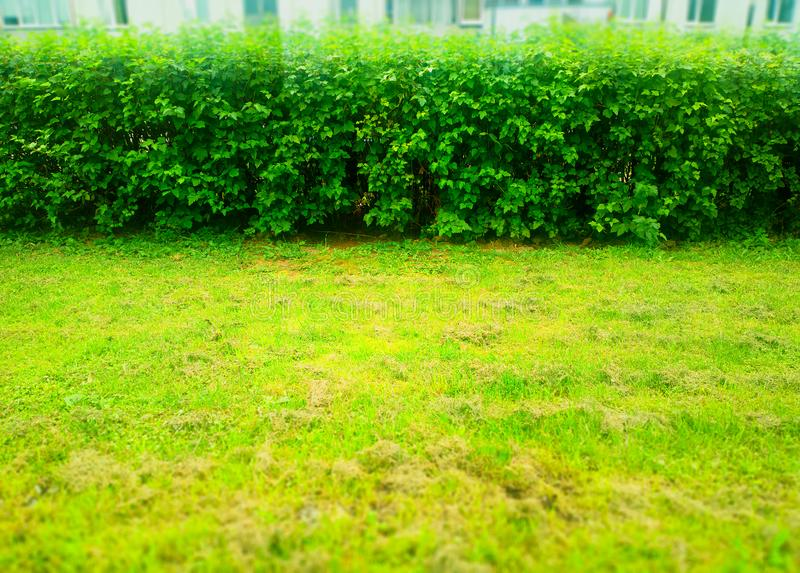 Horizontal trimmed park bushes background royalty free stock images
