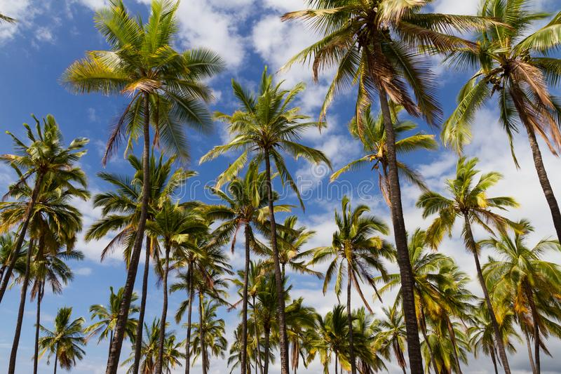 Horizontal tropical photo stock
