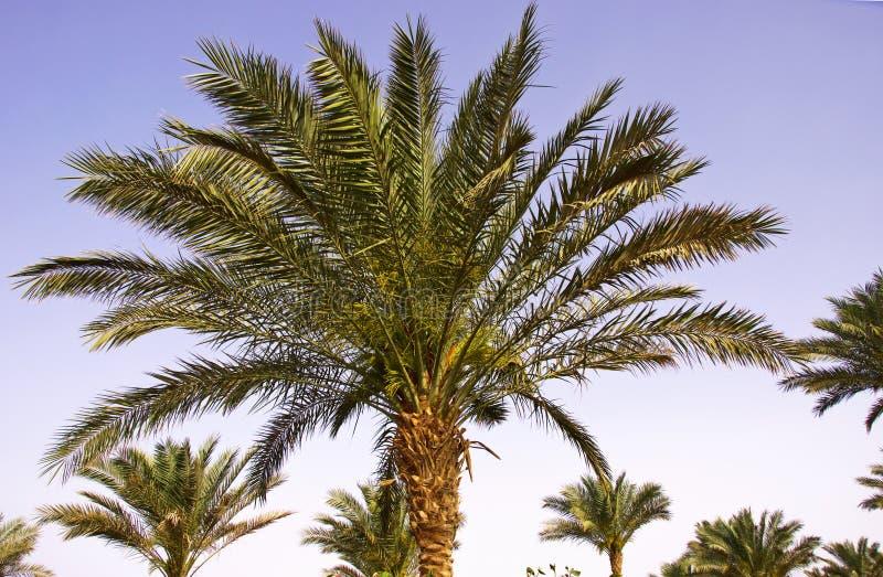 Download Horizontal tropical photo stock. Image du ensoleillé - 45353084