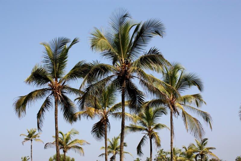 Horizontal tropical photographie stock libre de droits