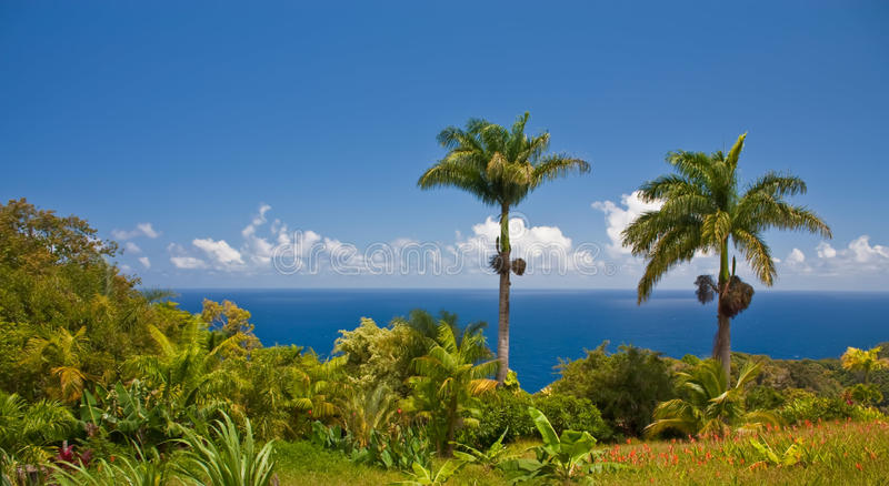 Horizontal tropical de Maui photos stock