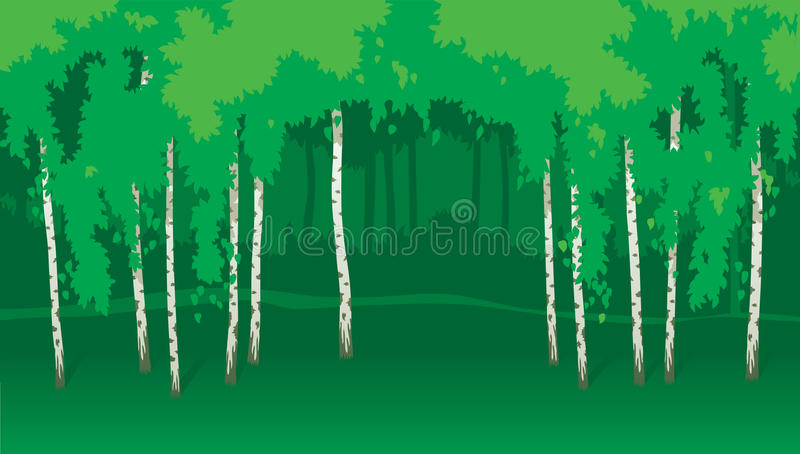 Download Birches stock vector. Image of bark, leaf, summer, scene - 30188054