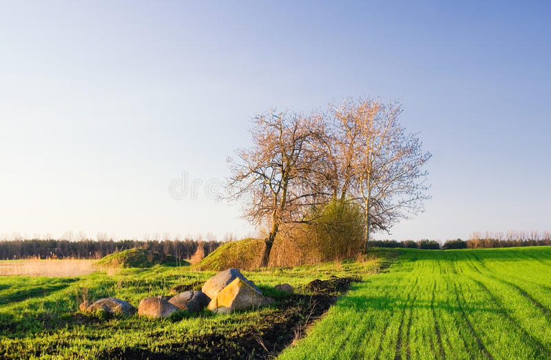 Horizontal vert de zone photographie stock