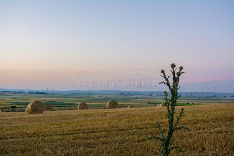 Horizontal View of Bale ol Hay in the Countryside at Sunset on C royalty free stock image