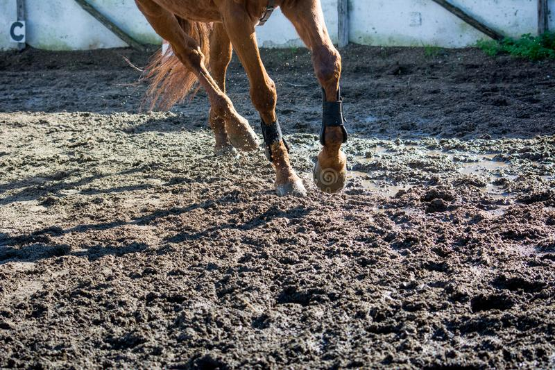 Horizontal View Of A Brown Horse Gallopping. On Sand During An Equestrian Competition stock photos