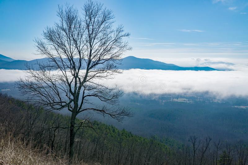 Horizontal View of a Pine Tree and a Foggy Valley royalty free stock photos