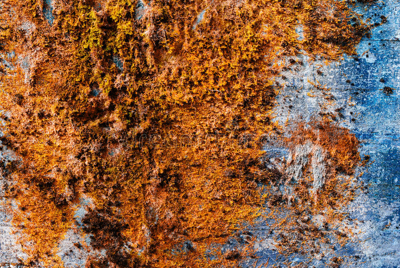 Horizontal vintage orange moss rusty concrete wall texture backdrop royalty free stock photos
