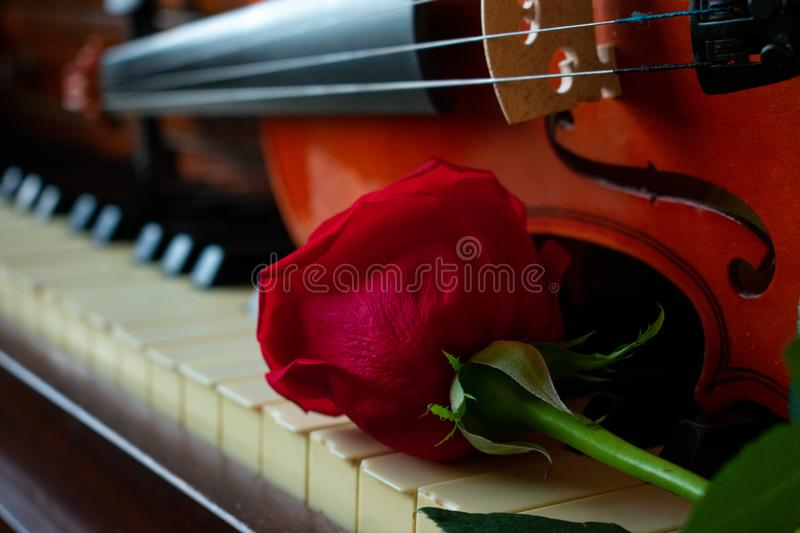 Red roses on a piano royalty free stock image
