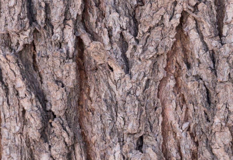Horizontal von einer südwestlichen Seife Berry Tree stockfotografie