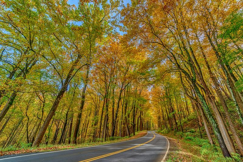 Colorful Trees Surround a Smoky Mountain Road in Autumn. Horizontal wide angle perspective shot of colorful trees surrounding a Smoky Mountain road in Autumn stock photos