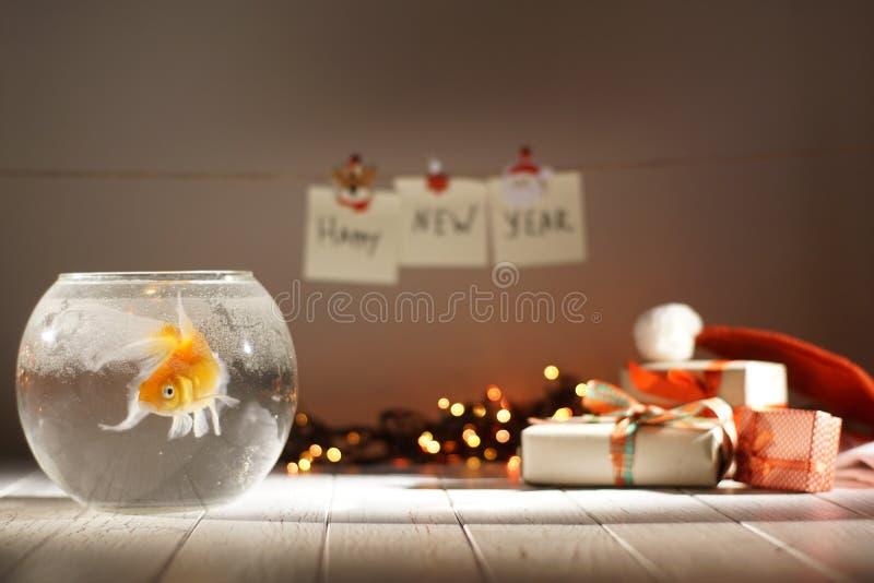 Horizontale Ansicht der goldenen Fischschwimmens im Kreisaquarium am unscharfen Hintergrund von Weihnachtsgeschenken stockfoto