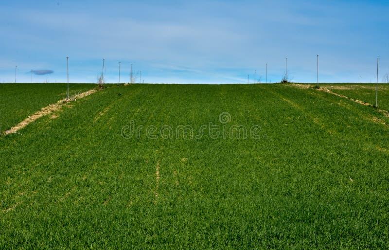 horizontale foto van een landbouwgebied met groene gewassen en een irrigatie het water geven systeem om het gras water te geven o royalty-vrije stock foto