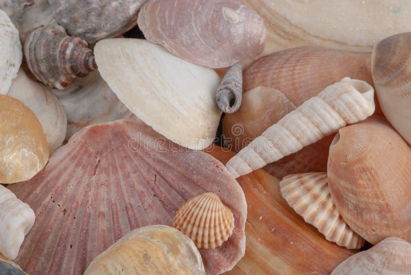 Horizontale Nahaufnahme von verschiedenen farbigen Muscheln lizenzfreies stockfoto
