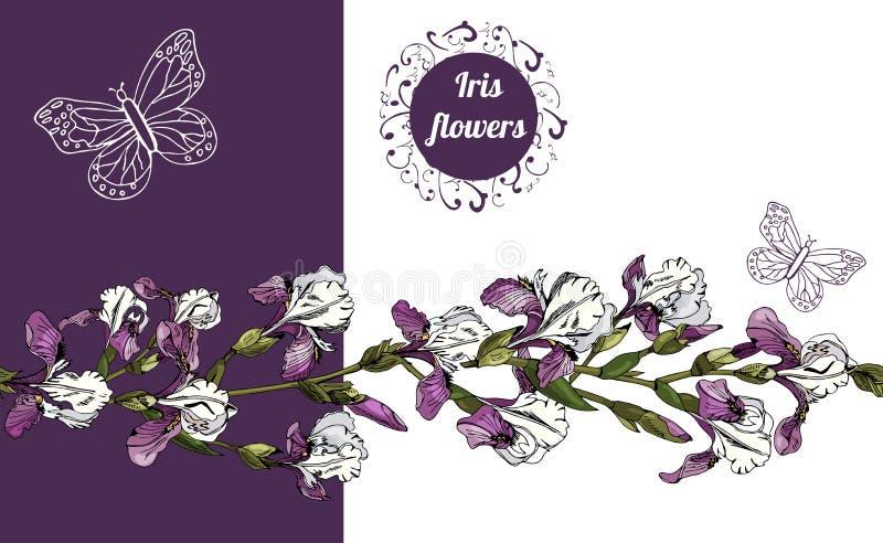Horizontale Zusammensetzung mit Blumen von Iris und von endloser Bürste stock abbildung
