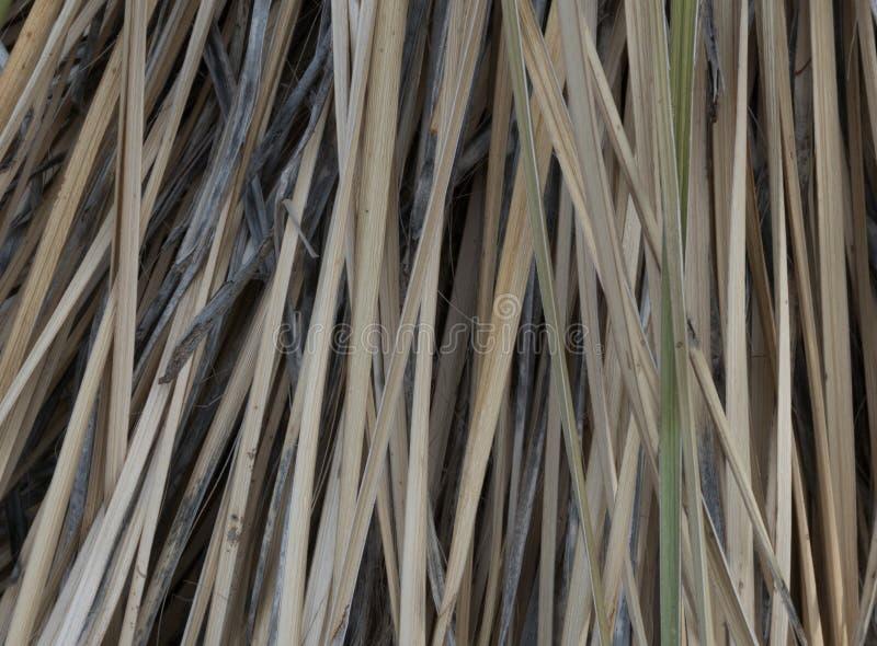 Horizontaler Abschluss oben einer Yuccaanlage stockfotos