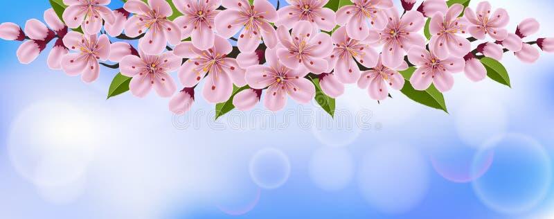 Horizontaler Frühlingshintergrund mit rosa Kirschblumen und -niederlassung stock abbildung