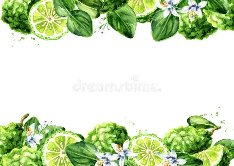 Horizontaler Hintergrund der frischen Bergamotte Gezeichnete Illustration des Aquarells Hand, lokalisiert auf wei?em Hintergrund lizenzfreie abbildung