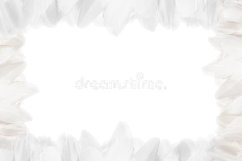 Horizontaler Rahmen von weißen Federn Getrennt auf wei?em Hintergrund lizenzfreie stockfotografie