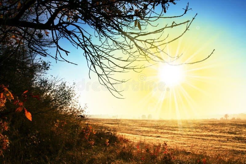 Horizontaux d'automne photo libre de droits