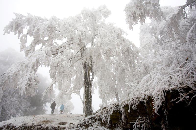 Horizontaux en hiver images libres de droits