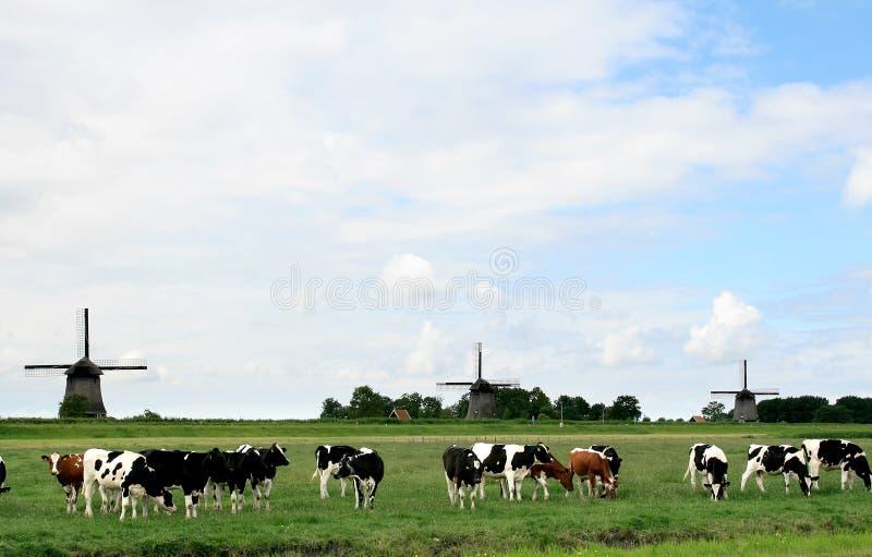Horizontaux hollandais avec des vaches et des moulins photos stock
