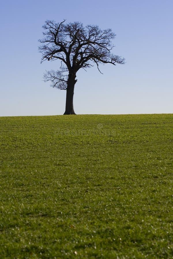 Horizonte 3 da árvore foto de stock royalty free