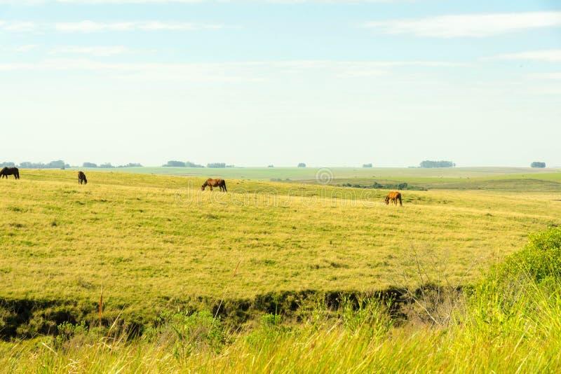 Horizonte azul y caballos 01 imagen de archivo
