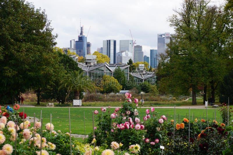 Horizonte de Francfort en otoño, de jardines botánicos foto de archivo libre de regalías