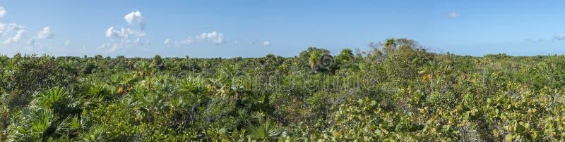 Horizonte de la selva de Yucatán imagen de archivo libre de regalías