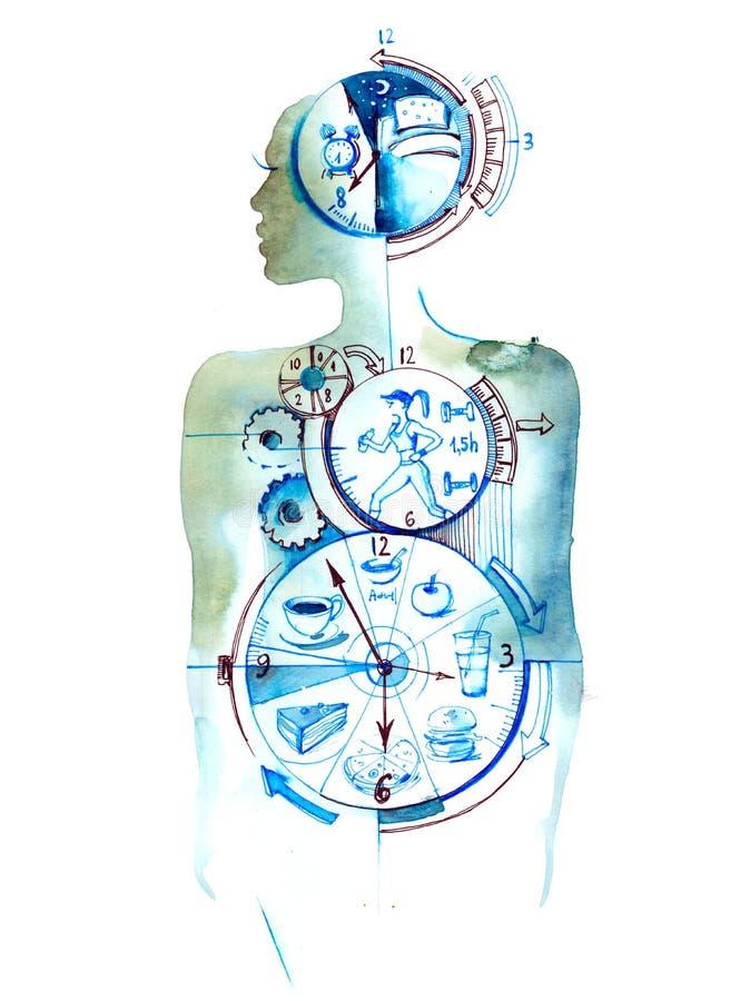 Horloge biologique illustration libre de droits