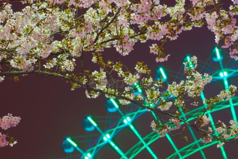 Horloge de fleurs de cerisier et de Cosmo photos stock