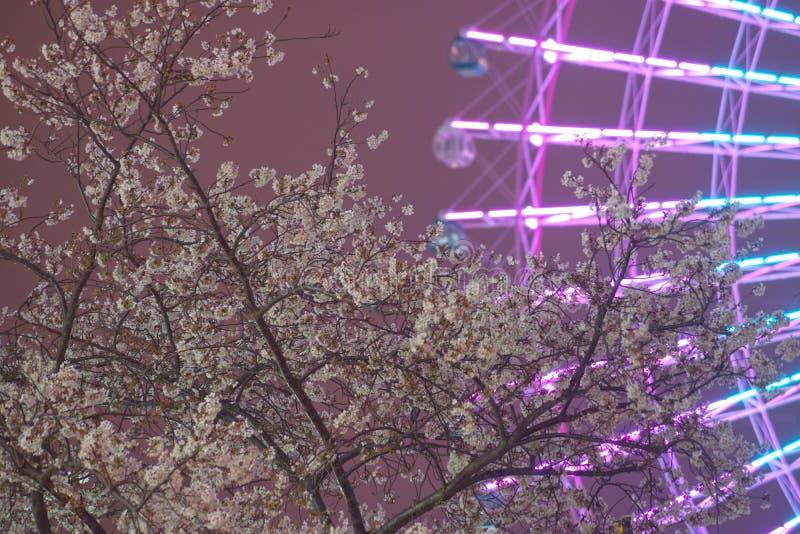 Horloge de fleurs de cerisier et de Cosmo photo libre de droits